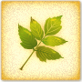 Leaf Classification - Learn how to classify leaves scientifically