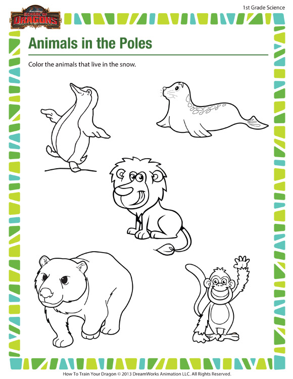 Animals in the Poles - Free 1st Grade Science Worksheet