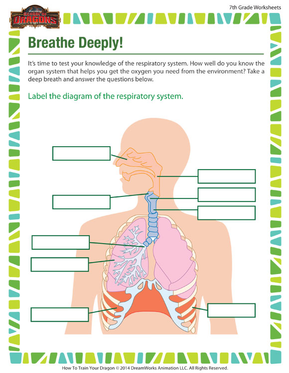 Breathe Deeply - Fun Science worksheet