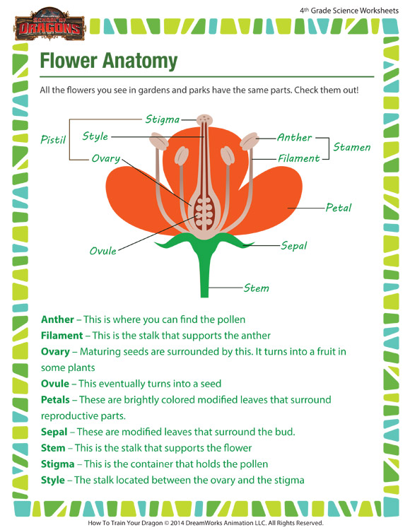 Flower Anatomy - Botany for Grade 4