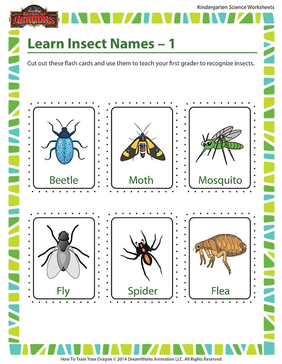 Learn Insect Names – 1 - Life science worksheet for kindergarten