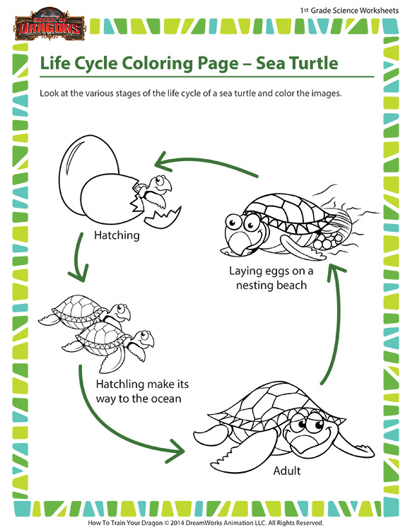 Life Cycle Coloring Page Sea Turtle Science Printable Sod