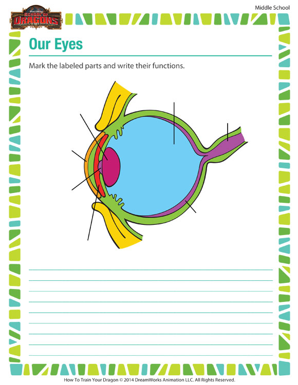Our Eyes - Printable Science Worksheets for 7th Grade