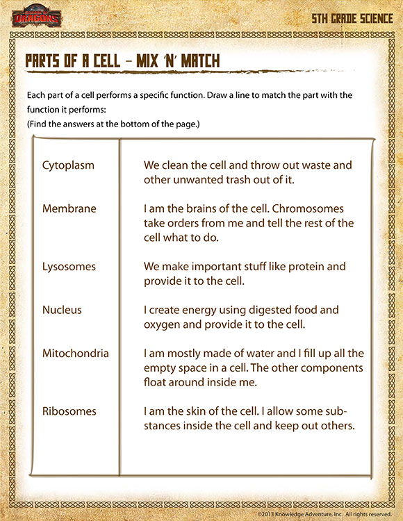 Parts of a Cell – Mix 'n' Match - Free Science Worksheets