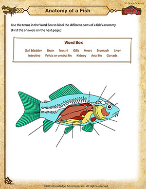 Anatomy of a Fish – 5th Grade Science Worksheets Online