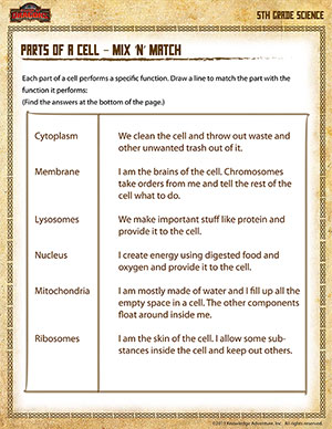 5th Grade free worksheets 5th grade : Parts of a Cell – Mix 'n' Match – 5th Grade Science Worksheet