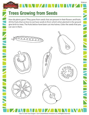 Trees Growing From Seeds – Kindergarten Science Worksheet– School ...